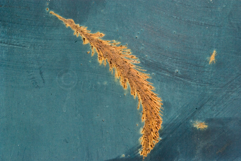 Abstract Feather!  Rusty gash on Blue Dumpster